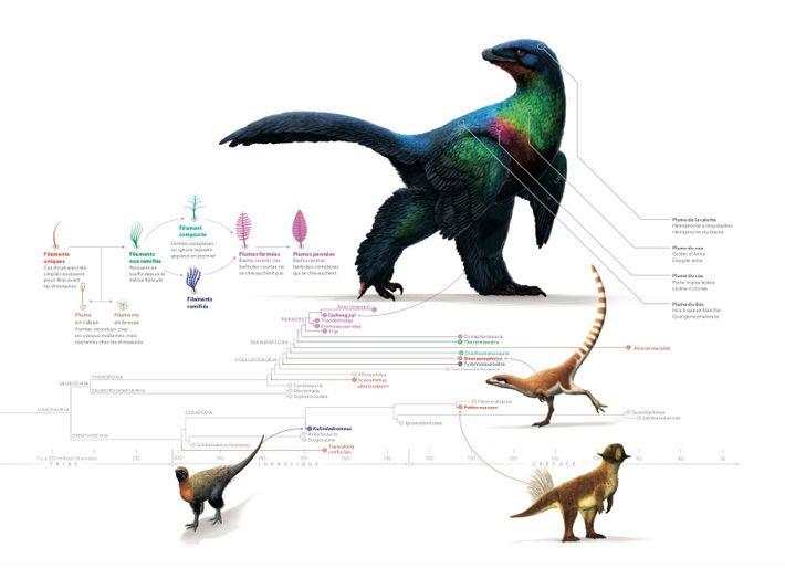 Dans les premières reconstitutions, les dinosaures ressemblaient le plus souvent à des reptiles. Mais les scientifiques ...