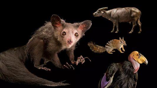 La conservation des espèces menacées ne devrait pas dépendre de leur popularité