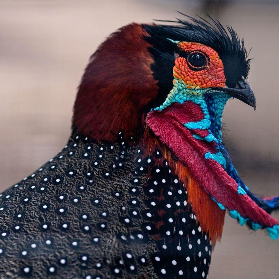 Pour le roi des oiseaux, la reproduction est avant tout une question de style