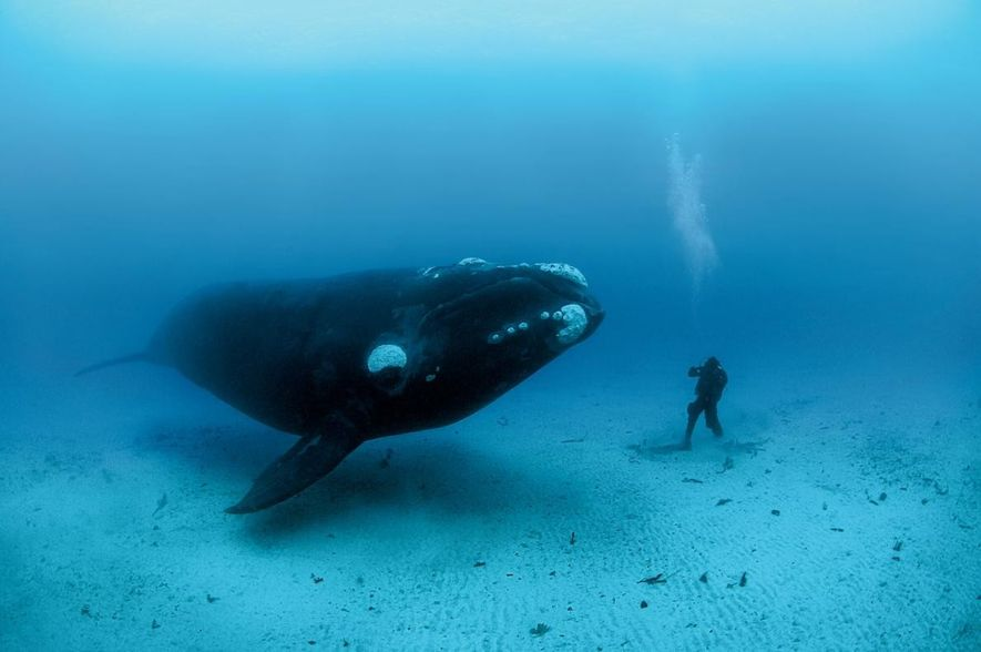 Rencontre avec le photographe qui a passé 10 000 heures sous les mers