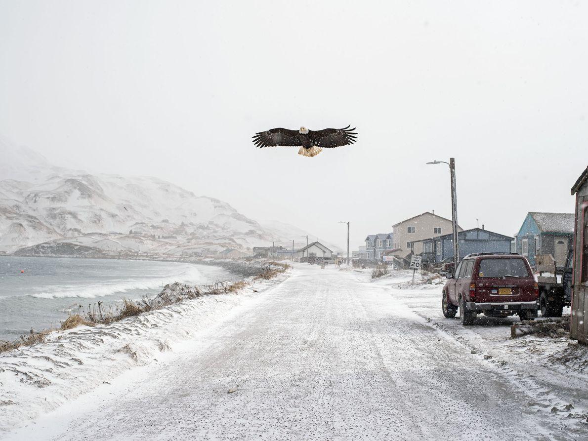 Chaque hiver, des travailleurs détachés viennent remplir des tâches saisonnières. À peu près à la même ...
