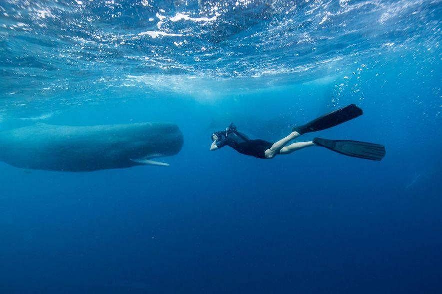 Le métier de photographe sous-marin expliqué aux enfants