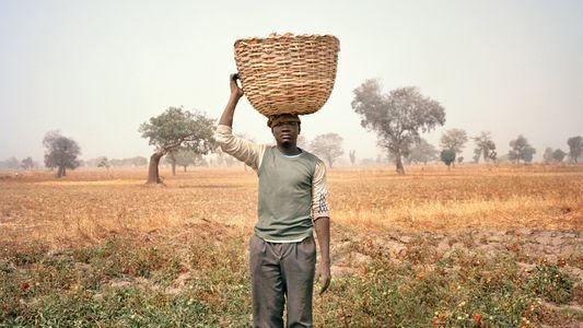Les fermiers peuvent-ils cultiver la paix au Nigéria ?