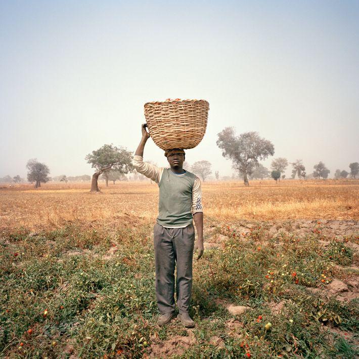 Portant un 45 kilos de tomates sur sa tête, un fermier nigérian démontre l'utilité d'un système ...