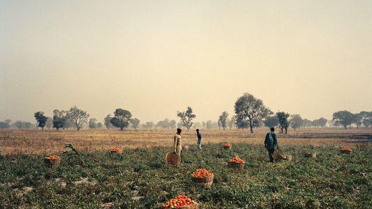 Nigéria : délaisser les armes pour l'agriculture