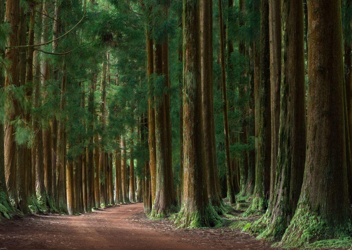 Calme forestier