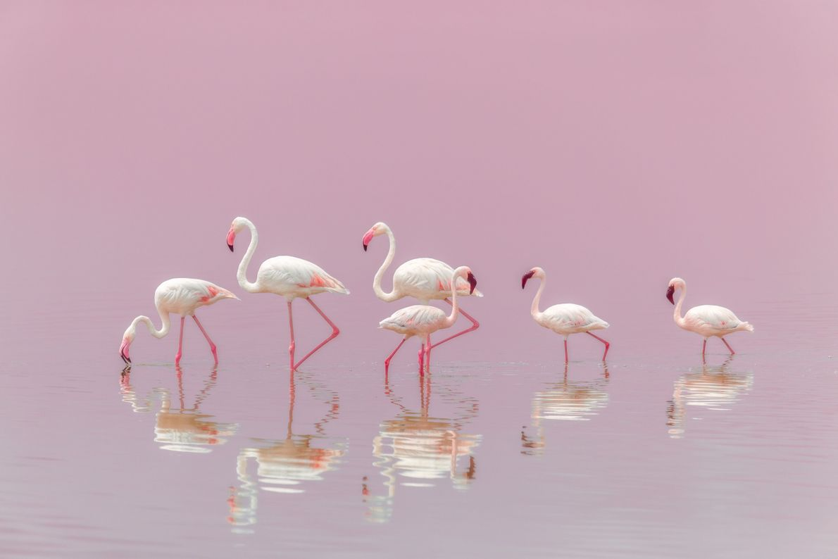 Foule de flamants roses