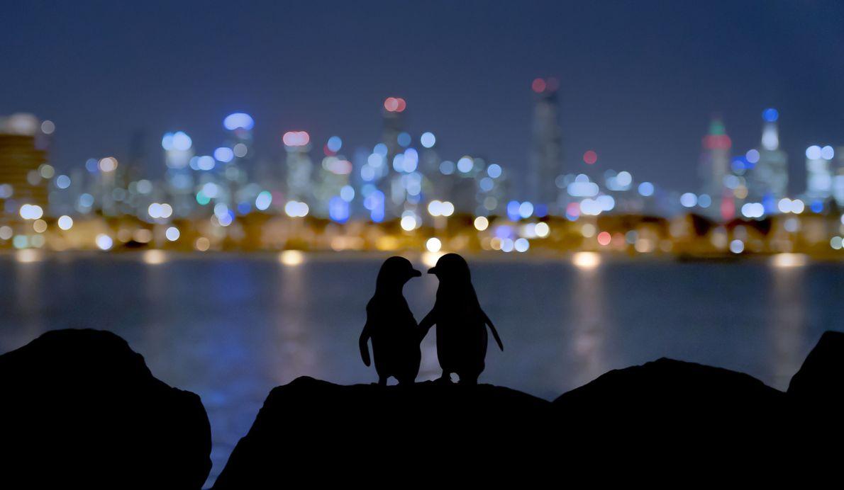 Penguins' Paradise