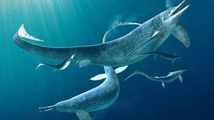 Un fossile de prédateur marin a été retrouvé dans l'estomac d'un autre