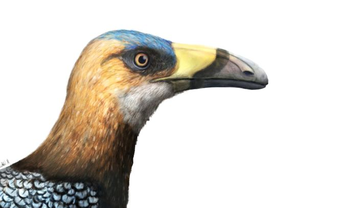 Nommé Falcatakely forsterae, l'oiseau du Mésozoïque vivait il y a près 68 millions d'années.