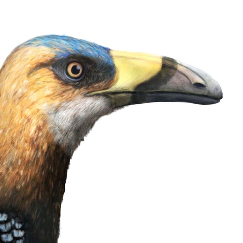 Mystérieuse découverte d'un fossile de « toucan à dents de lapin »