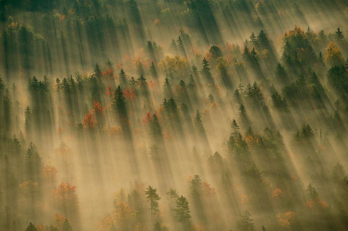 Vue aérienne d'une forêt aux teintes automnales enveloppée dans un brouillard matinal, dans le parc national ...
