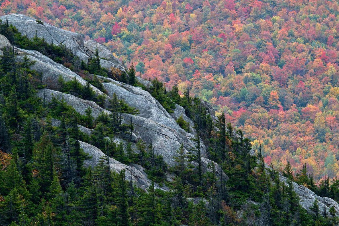 Des conifères recouvrent les crevasses du mont Catamount, dans le parc d'Adirondack, au sein de l'État ...