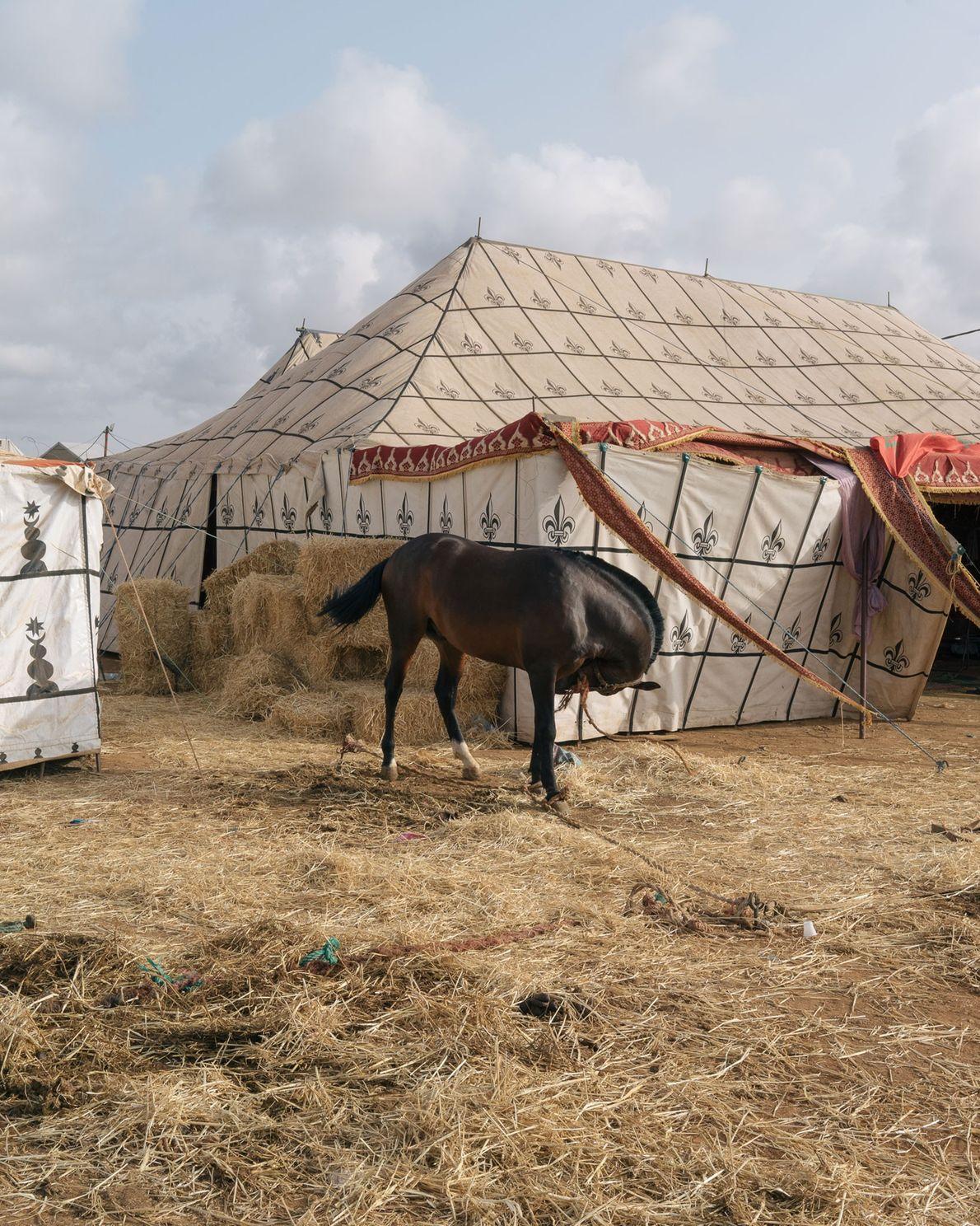 Les Arabes, les Andalous et les Barbes sont les races de chevaux les plus représentées lors ...
