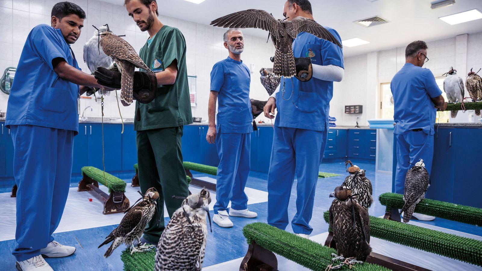 La clinique pour faucons d'Abu Dhabi soigne près de 11 000 oiseaux par an, ce qui ...