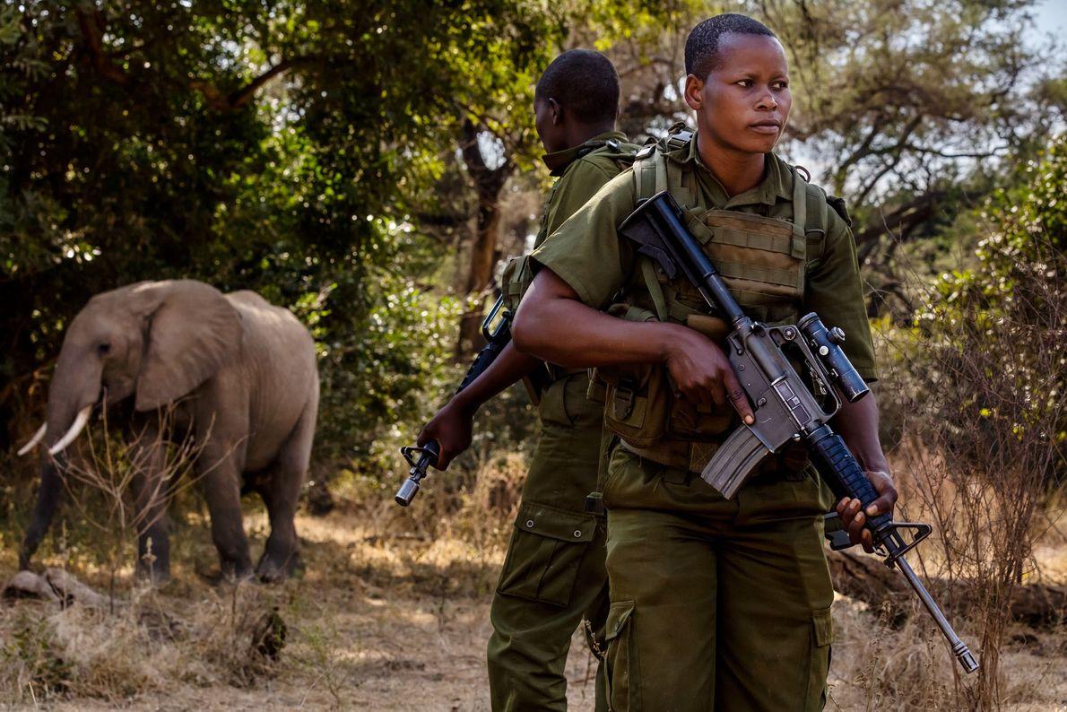 Wadzanai Munemo et une autre ranger rencontrent un éléphant lors d'une patrouille sur des terres protégées. ...