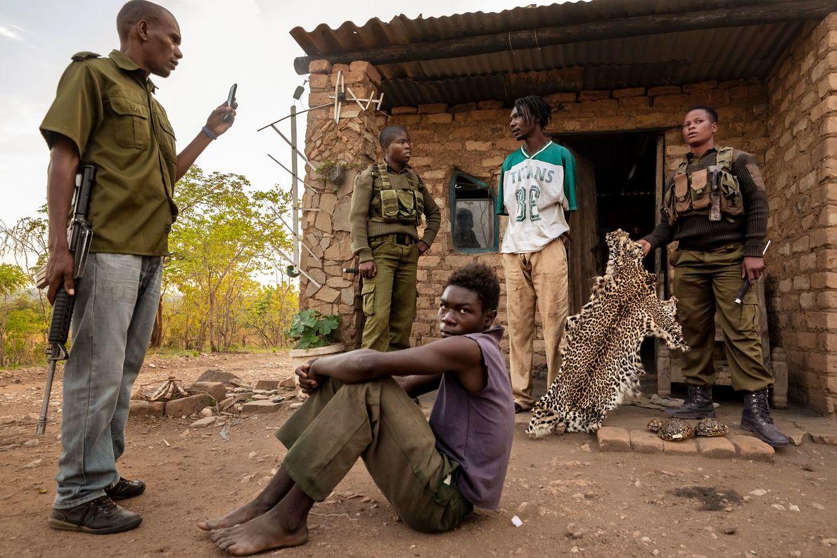 Après avoir fouillé une maison et trouvé une peau de léopard, deux rangers interrogent un braconnier ...