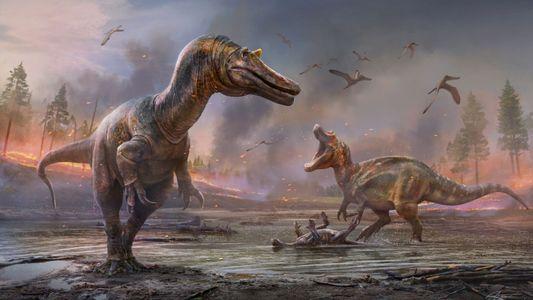 Le « héron de l'enfer » livre de nouveaux indices sur les origines du spinosaure