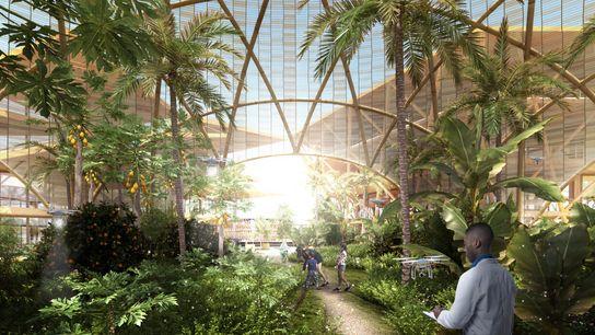 Dans ce concept, les résidents cultiveraient leur propre nourriture dans des fermes éclairées par la lumière ...