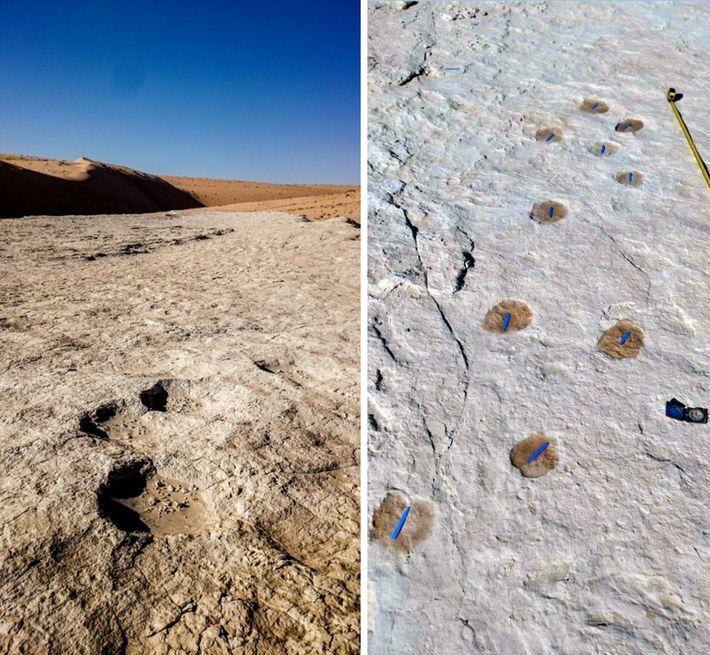 Ces traces de pas d'éléphant (à gauche) et de chameau (à droite) figurent parmi les empreintes ...