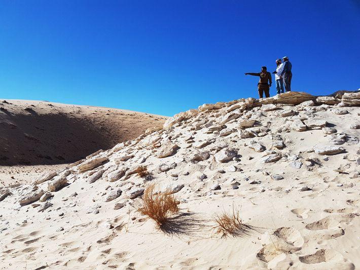 Les empreintes fossilisées ont été découvertes sur le site de l'ancien lac Alathar en Arabie saoudite.