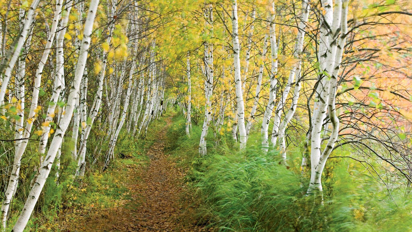Photographie prise au parc national d'Acadia, une réserve de 19 000 hectares située sur la côte atlantique des ...