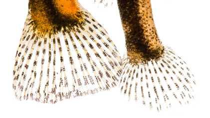 Les poissons d'eau douce en images