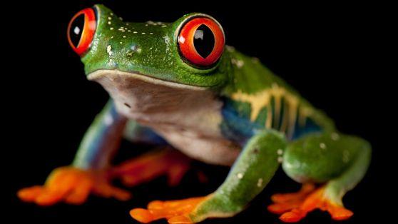 13 images sublimes qui nous rappellent que les grenouilles ont besoin de notre aide