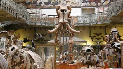 Le Muséum national d'Histoire naturelle veut sauver le mammouth de Durfort