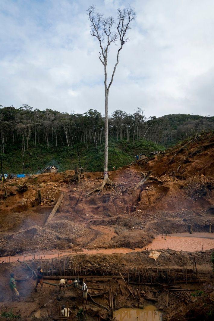 Seul un arbre sacré est encore debout dans cette parcelle de forêt officiellement protégée, mais illégalement ...