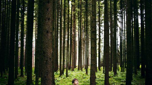 Oui, il est possible de changer le monde avec des arbres