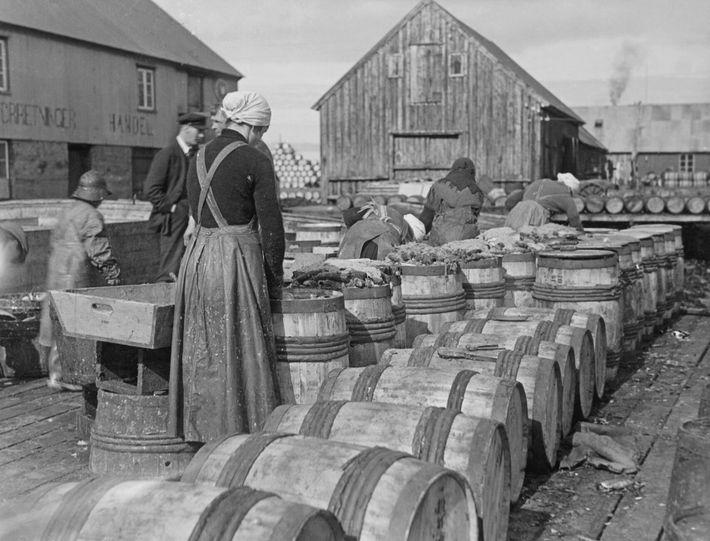 Sur cette photographie datant de 1935, des femmes remplissent des tonneaux de harengs, de sel et de ...