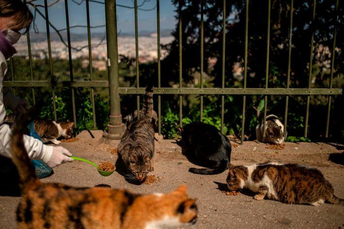 GREECE-HEALTH-VIRUS-ANIMALS