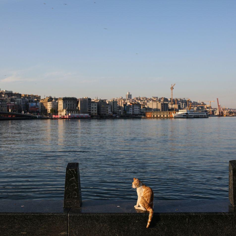Que deviennent les animaux errants dans les villes désertées par les touristes ?