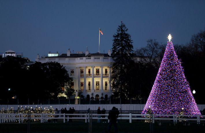 Le National Christmas Tree (sapin de Noël national) est illuminé dans la partie sud de l'Ellipse de la ...