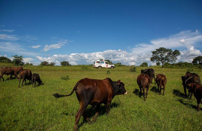 Un 4x4 transporte des vaccins non loin du village de Jari au Zimbabwe, lors de la ...