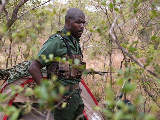 Afrique du Sud : les rangers seraient-ils devenus les pires ennemis des rhinocéros ?