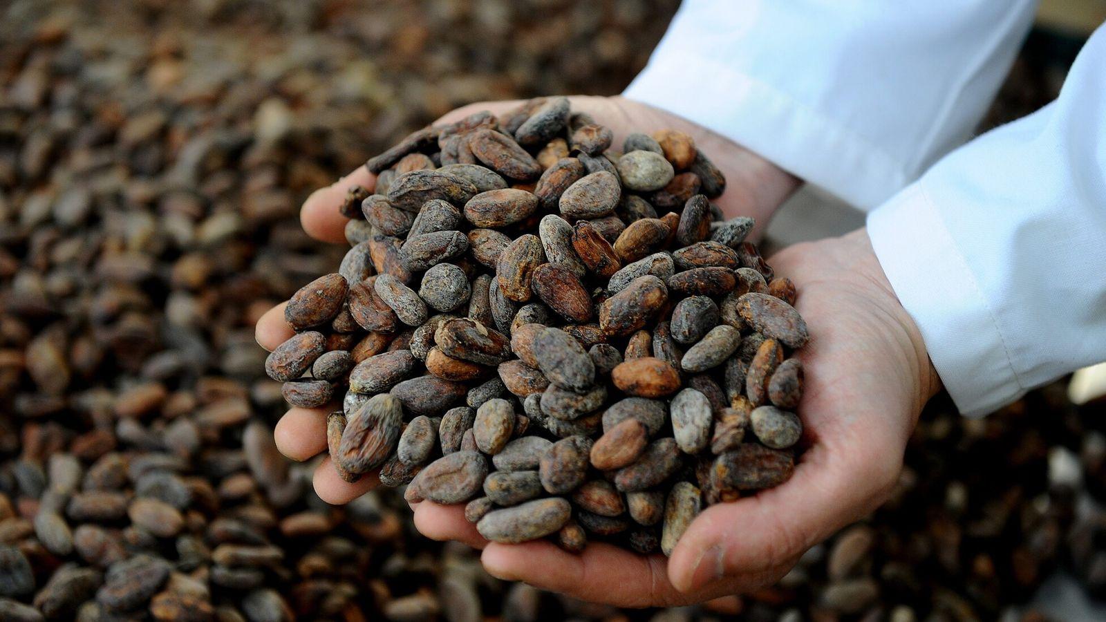L'Équateur est connu pour son chocolat fin à la renommée internationale, fabriqué à partir de variétés ...