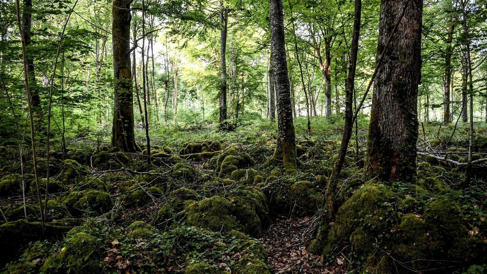 Situé à trois heures de Paris, le 11e parc national français protège un écosystème unique de ...