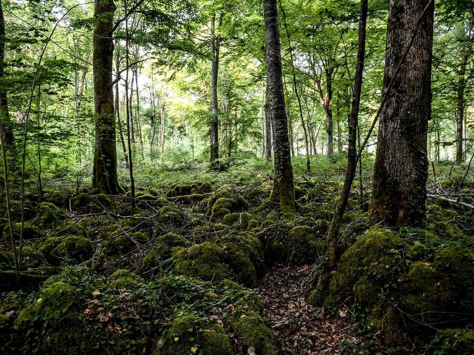 France : dans le nouveau Parc National de Forêts, les arbres sont rois