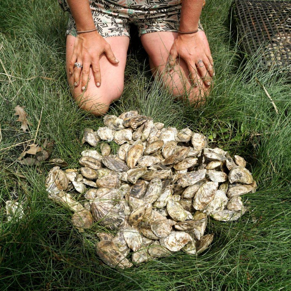 Votre passion pour les huîtres fraîches serait bonne pour la planète