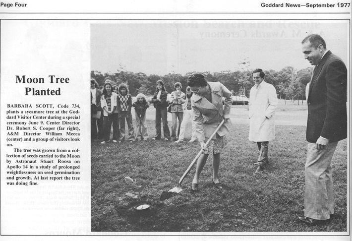 Un extrait du numéro de septembre 1977 de Goddard News montre la plantation cérémonielle de l'arbre ...
