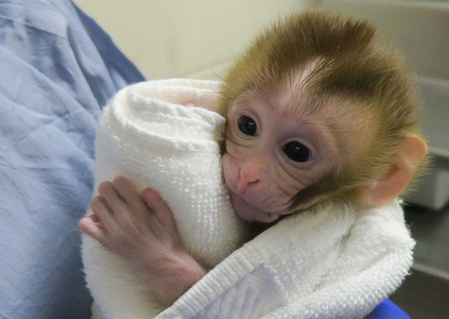 Grady, alors âgée de deux semaines, se cramponne à la serviette dans laquelle elle est emmitouflée.