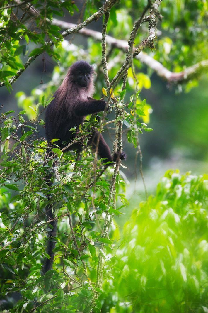 Le groupe de primates saisis par les autorités au mois de septembre alors qu'il faisait route ...