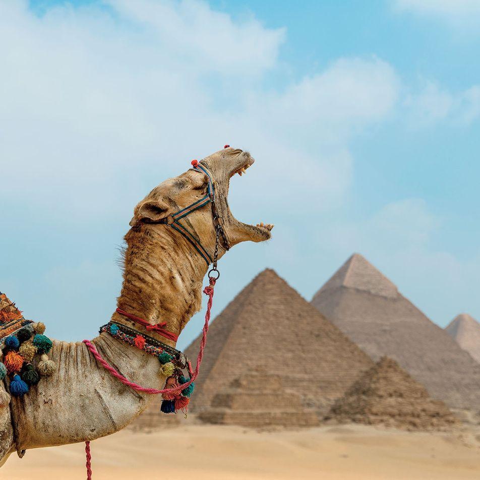 Égypte : les balades à dos d'animaux désormais interdites sur les principaux sites touristiques