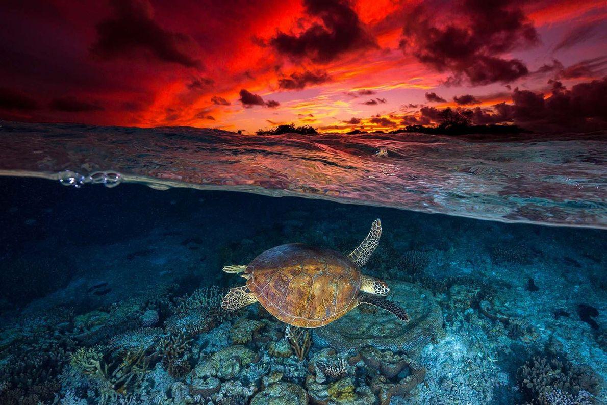 Sur cette image de la frontière entre ciel et mer prise par le photographe Your Shot ...