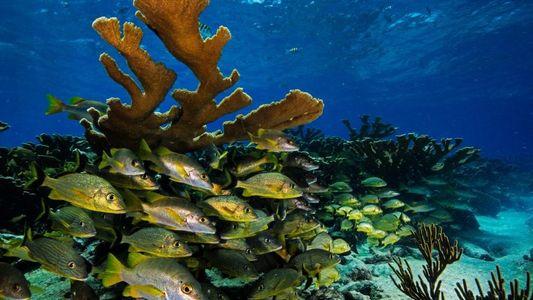 Cuba : le tourisme menace-t-il la biodiversité marine ?