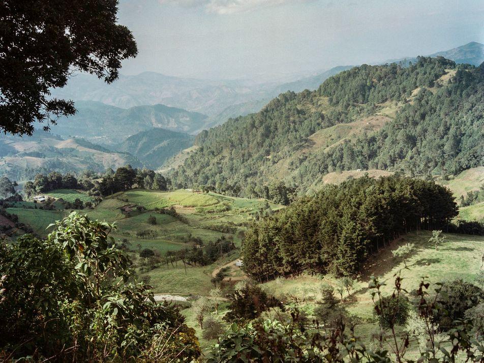 Les arbres au service de la culture du café au Guatemala