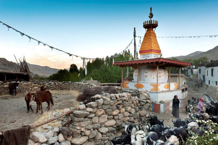 Au milieu du bétail se dresse un stupa, un lieu de méditation bouddhiste, à Ghami, au ...