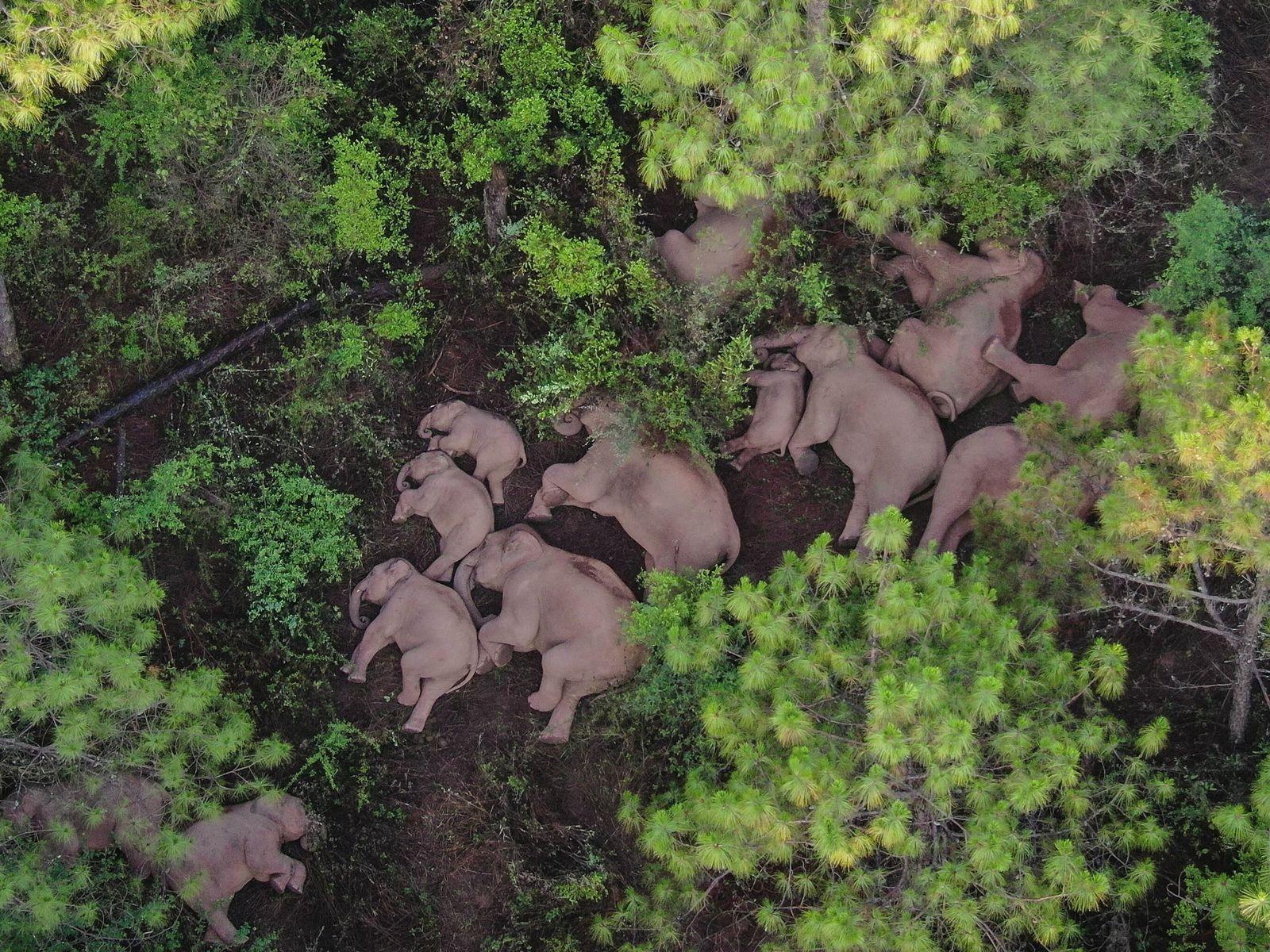 01-china-herd-elephants